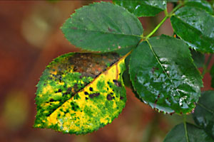 Bacteria Fungus And Viruses An Overview Growing A Greener World