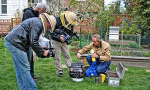 The importance of honeybees in the urban landscape