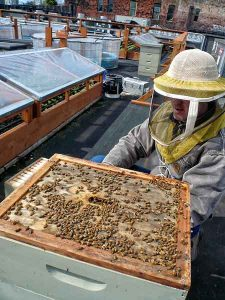Corky tends to the beehive on the rooftop garden of Bastilles
