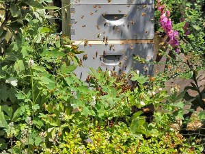 Robin added a beehive to ensure a good harvest from her vegetable garden