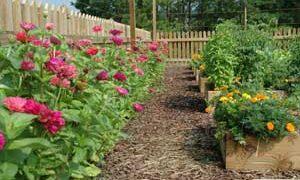 Proactive vs Reactive is the Successful Way to Garden