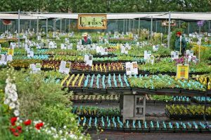 Having been on Annie's mailing list for years I was thrilled to make the trip to see the nursery in person