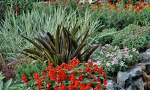 Annuals and Perennials Defined