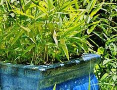 Controlling Bamboo When it gets out of Hand