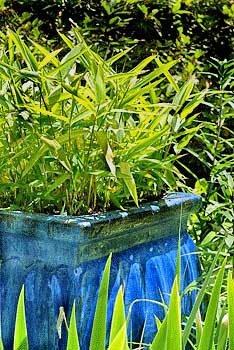 Controlling Bamboo When it gets out of Hand - Growing A Greener World®