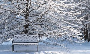 Winter-The Best Time to Work on Your Vegetable Garden