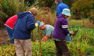 Community Gardening Offers Many Benefits