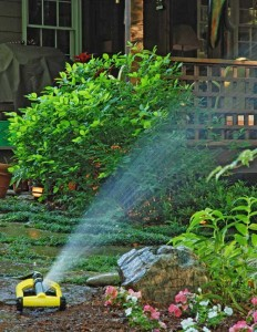 Tips for dealing with drought and watering restrictions
