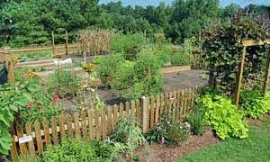 Organic Gardening: It's Easier Than You Think