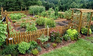 Garden with the Next Season in Mind