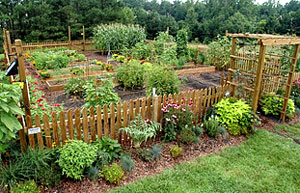 Ideas for gardening with the next season in mind