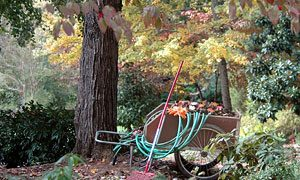 Fall is the Start of Next Year's Gardening Season