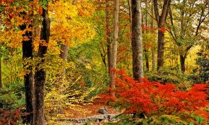Proactive Care in the Fall for Healthy Plants and Trees