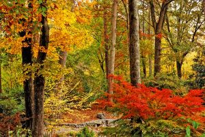 Proactively caring for trees and shrubs in fall will prolong their life