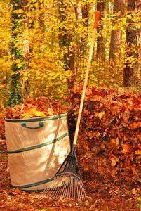 Fall leaves make wonderful compost
