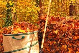 Fall Leaves are a Gift to Gardeners