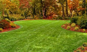 Fall Lawn Renovation