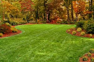 Fall Lawn Renovation
