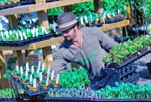 Daron Joffe tending to plants at his market