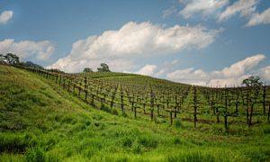 Episode 109:  Fetzer; The Earth-friendly Vineyard