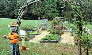 Biodynamic Gardening – An Overview