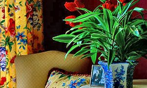 7 Ways to Kill a Houseplant