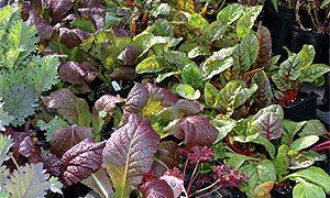 Spring Vegetable Gardening