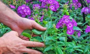 Tips for Buying Annuals