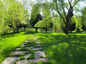 Organic-Lawn-Care-WebLOW