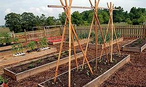 Organic Kitchen Garden at the White House