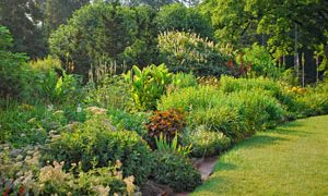 Perennials in the Landscape