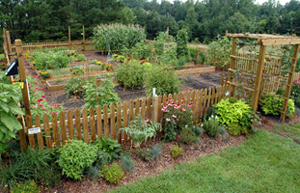 Image Result For Vegetable Gardening Albuquerque