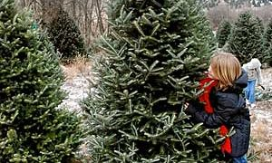 What is the 'Greener' Choice in Christmas Trees, Real vs. Artificial?