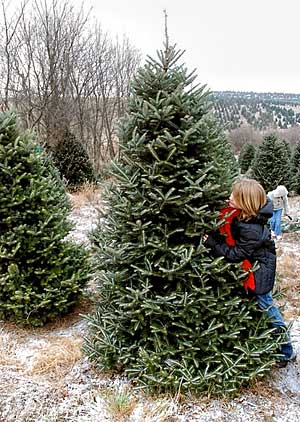 when trees were simply tossed to the curb where it became a heterogeneous mixture when combined with all the other Christmas discards destined for the ...