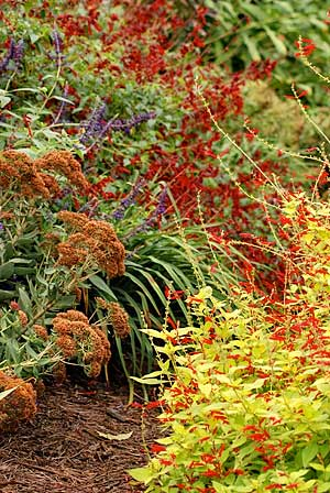 """Green"""" Your Garden Using Drought Tolerant Plants - Growing A"""