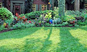 Spring Tips for a Great Looking Lawn