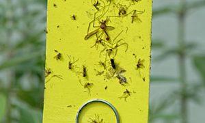 Organic Pest Controls
