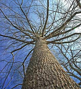 Short of removing a tree the best way to obtain increased light is to