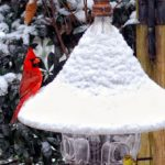 Winter_Bird_Care
