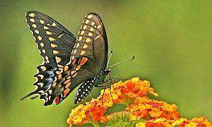 Butterfly Habitat Essentials