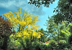 Fertilizing mature trees