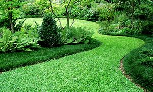 What is the best natural lawn fertilizer?