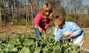 Gardening & Parenting – Passions Similar in Many Ways