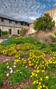 View of Lady Bird Johnson Wildflower Center Admin building with yellow flowers in forground