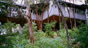 Image shows how very little vegetation was disturbed in building the house