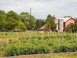 Honey Brook Organic Farm in Pennington NJ