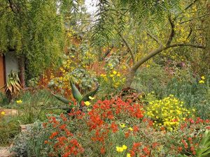 Nan Sterman's robust and colorful garden thrives with little additional water