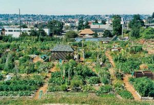 Overhead overview of the garden at Interbay P-Patch