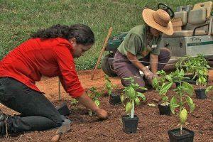 Patti and Head Gardener Pat Brodowski plant basil in a classic Roman quincunx pattern