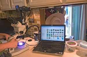 Computer on the Buglady's kitchen counter